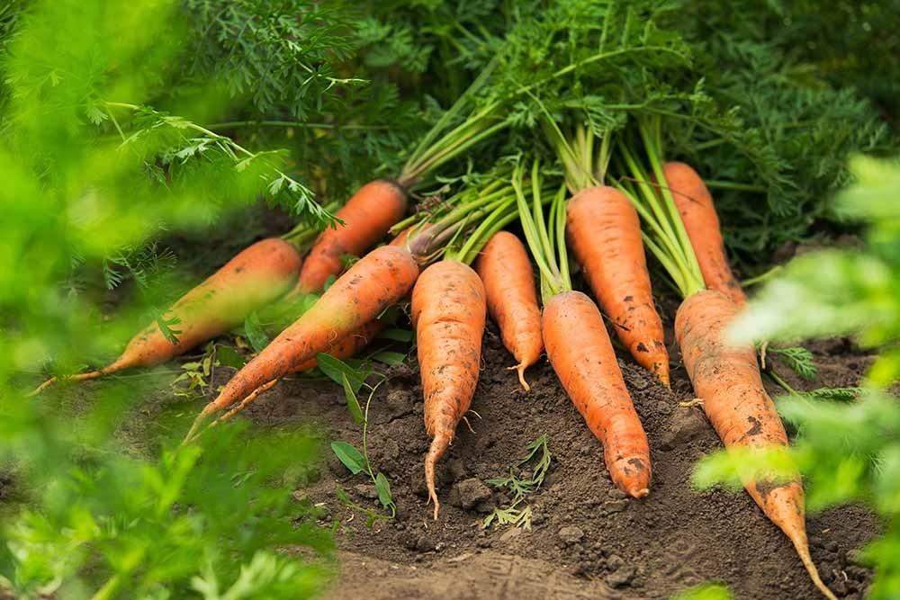 Consommez local et de saison avec nos paniers de légumes bio à Beaune